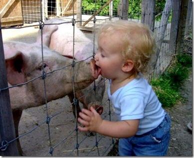 culpable-afluenza-porcina (1)